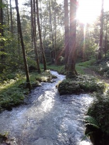 Waldbaden_Copyright Angelika Kutz 2015_unter 2 MB
